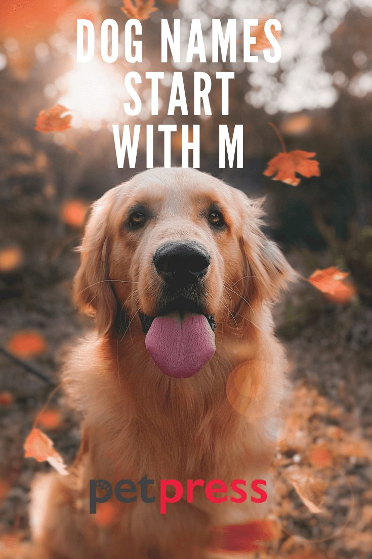 Dog Names Start With M