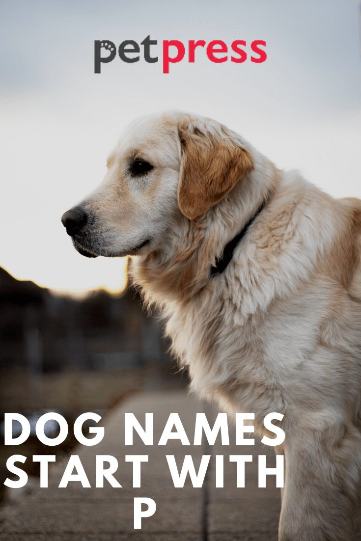 Dog Names Start With P