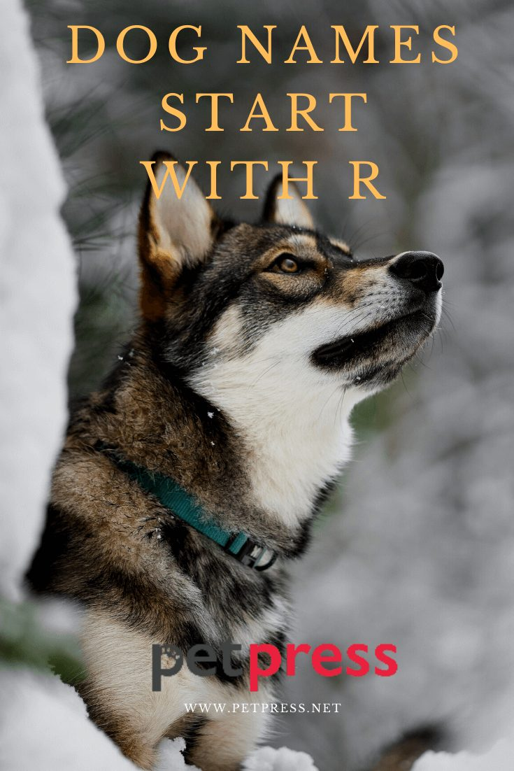 Dog Names Start With R