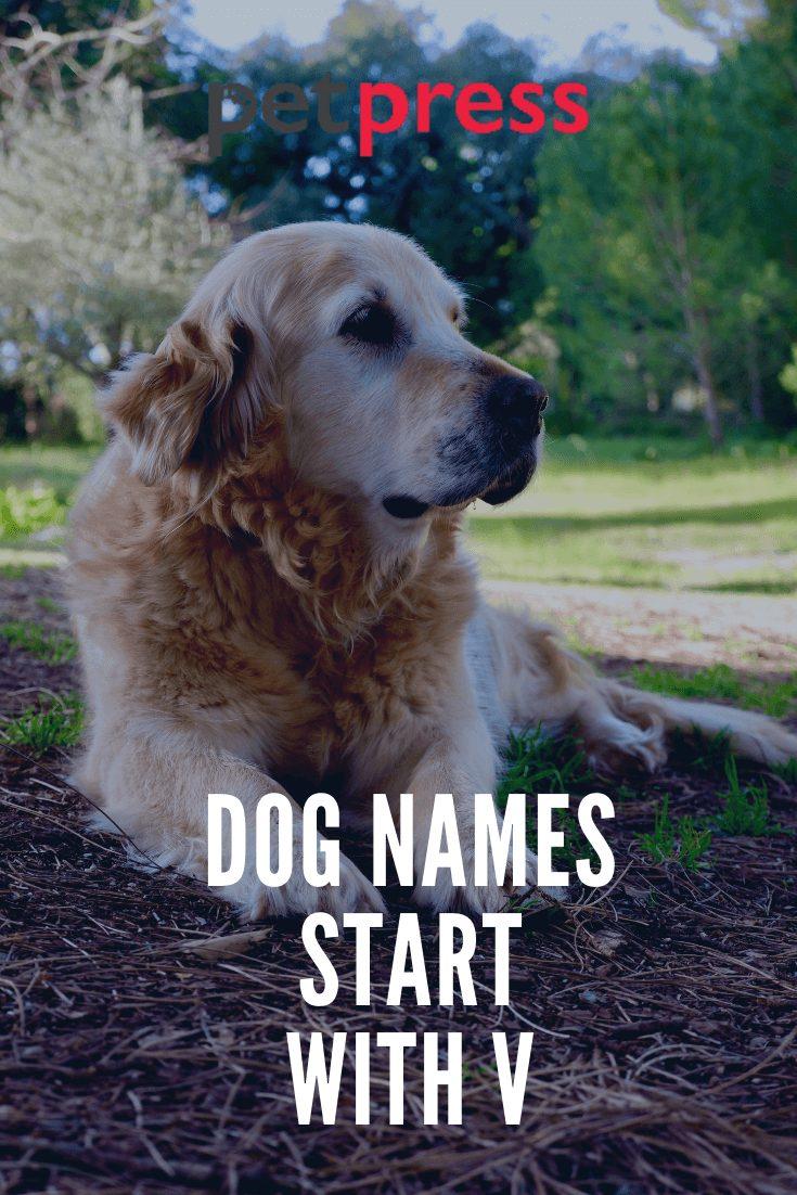 Dog Names Start With V
