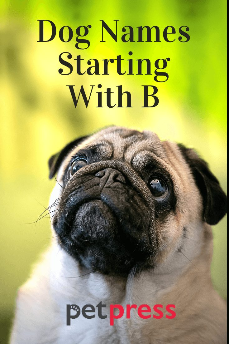 Dog Names Starting With B