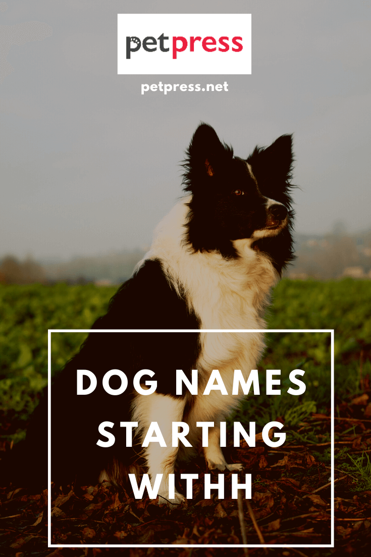 Dog Names Starting With H