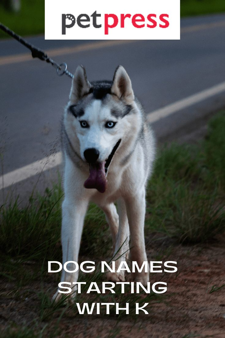 Dog Names Starting With K