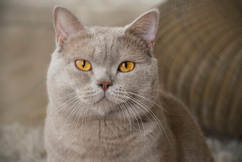 spanish cat names
