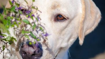 Top 10 most popular dog breeds in the USA1