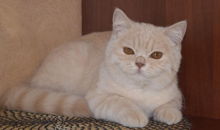 cream colored cat names