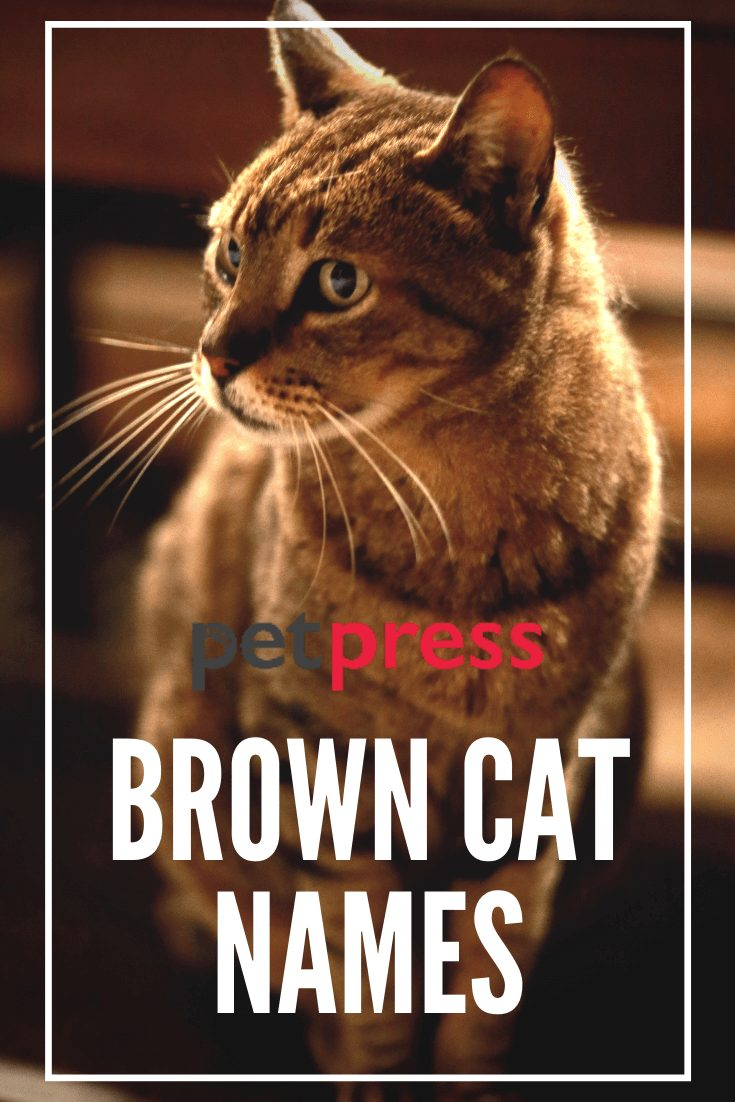 brown cat names