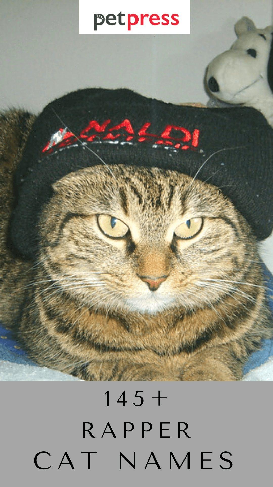 rapper-cat-names