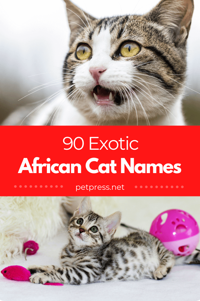 african-cat-names