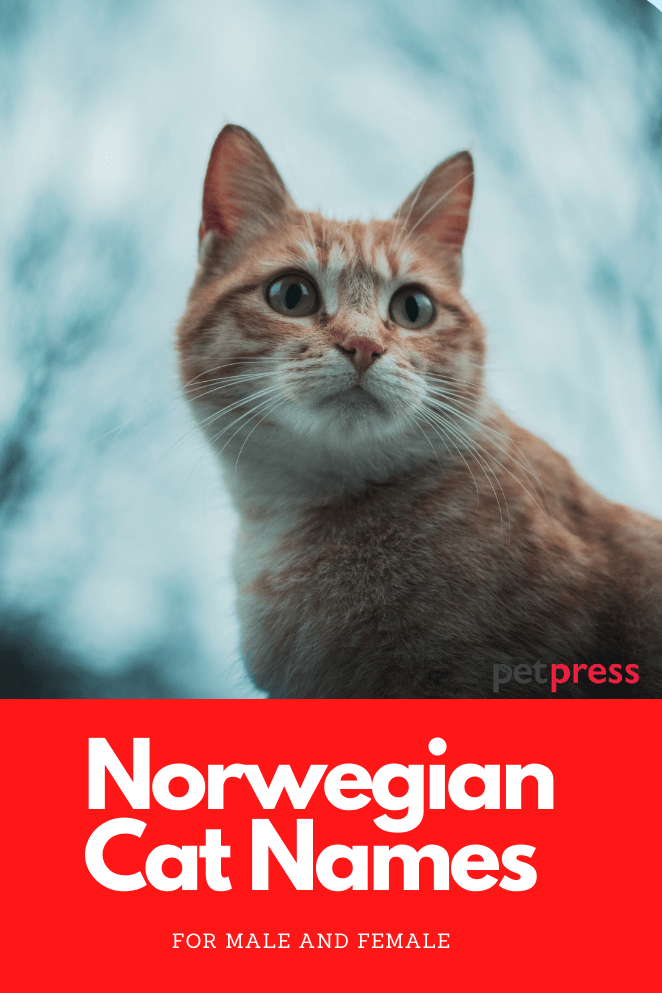 Nowegian-cat-names