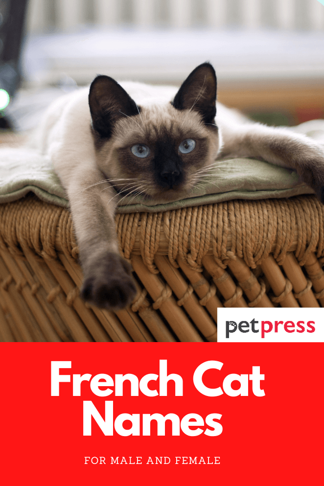 french-cat-names