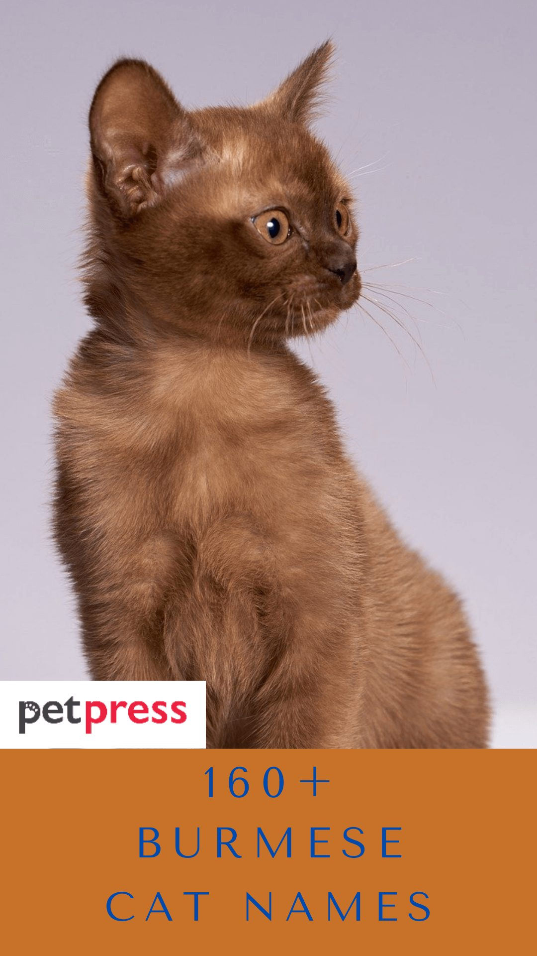 burmese-cat-names