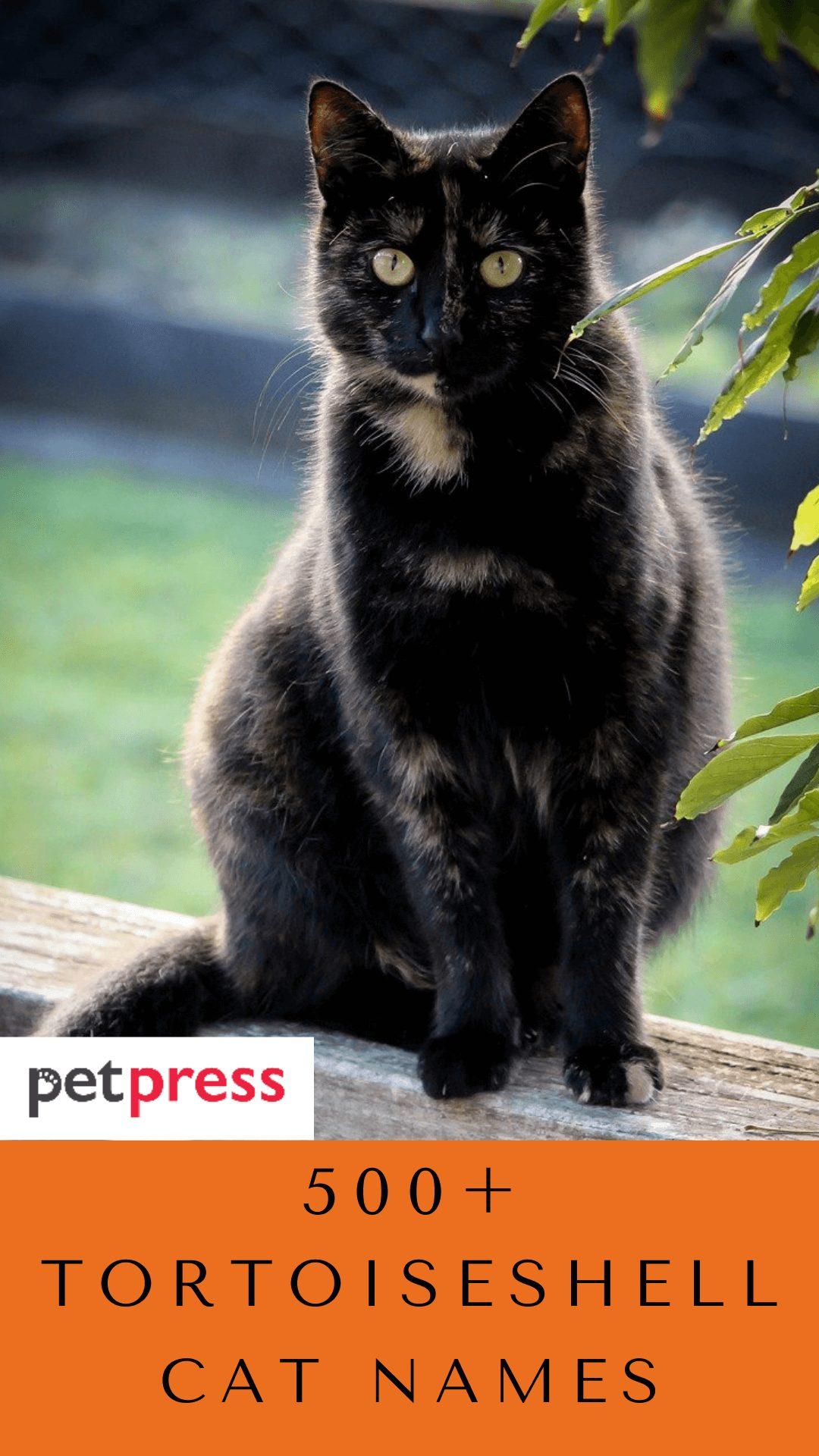 tortoiseshell-cat-names