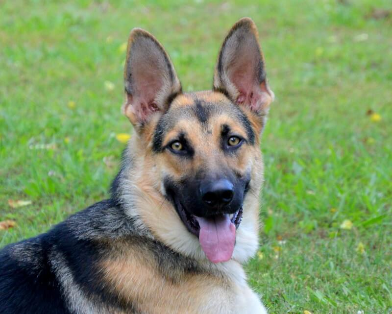 170 Male Indian Dog Names Best Male Dog Names In India Petpress