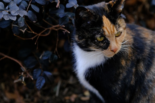 male-tortoiseshell-cat-names