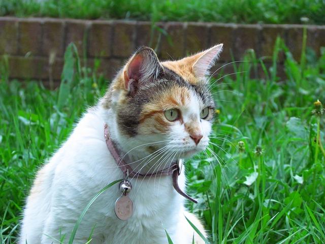 torbie-tortoiseshell-cat-names