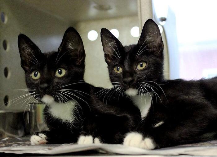 250 Twin Cat Names For Sibling Duo Cats Petpress