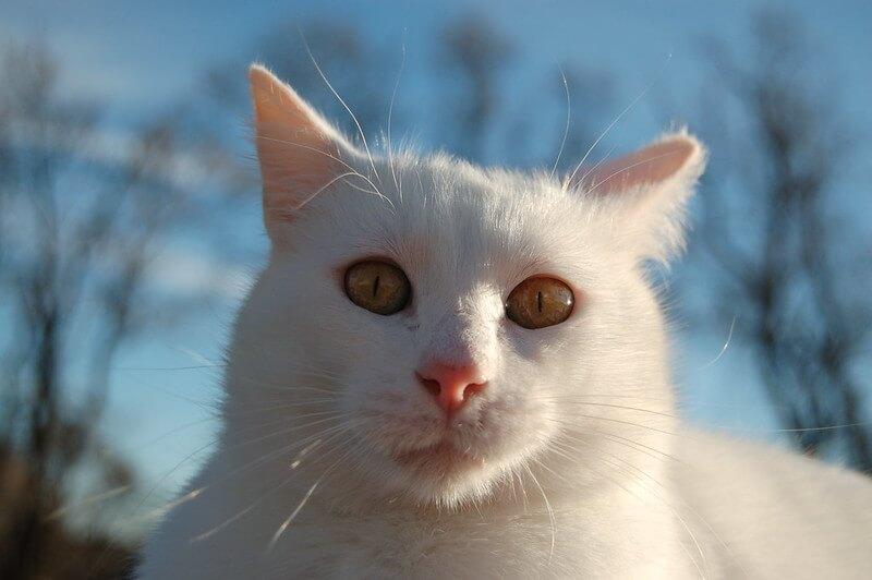 astronomy cat names