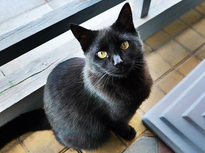 gothic cat names