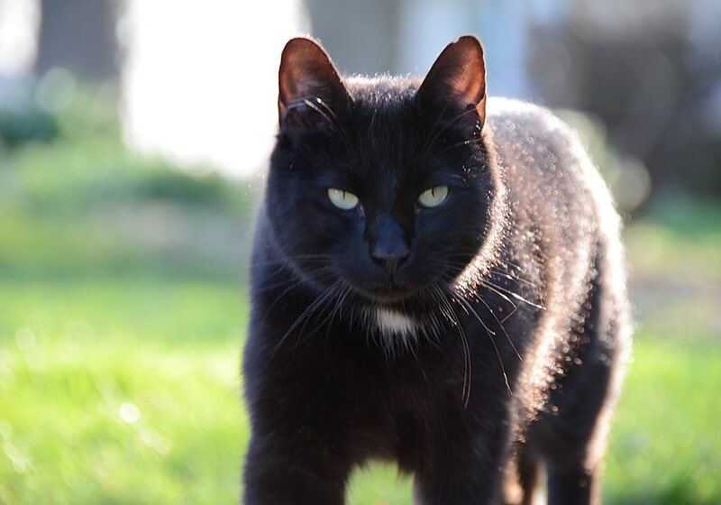 gangster cat names