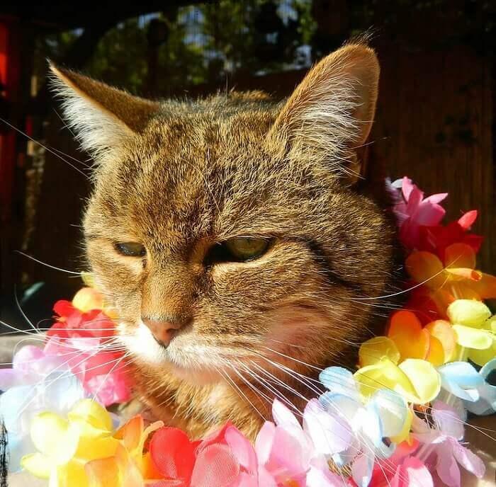 22+ Hawaiian boy names for cats information