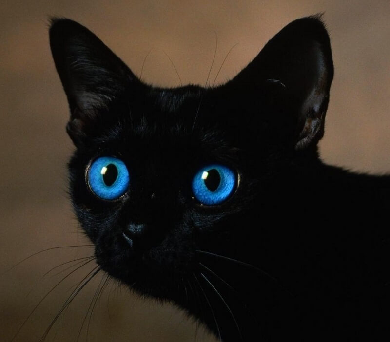 200 Blue Eyed Cat Names Pick The Best Blue Inspired Kitten Name Petpress