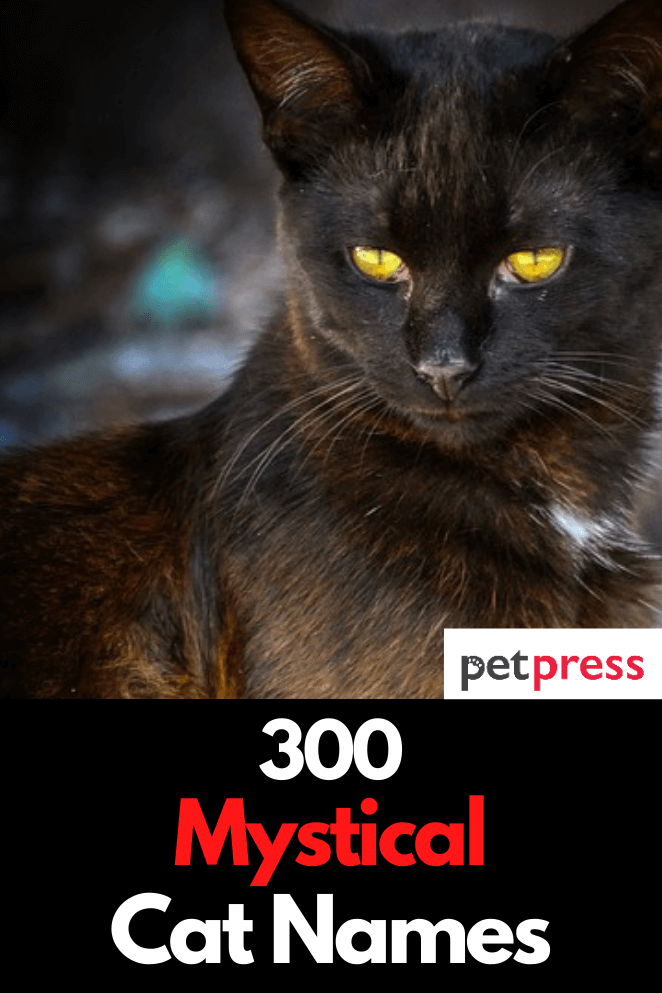30+ Mystical female names for cats info