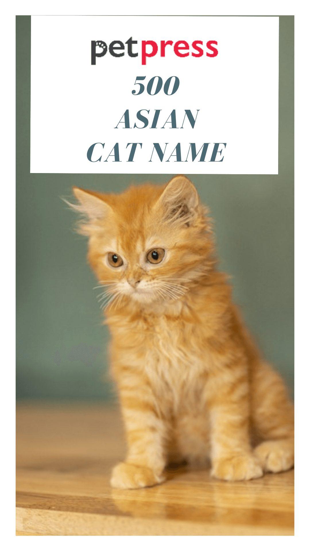 asian-cat-names