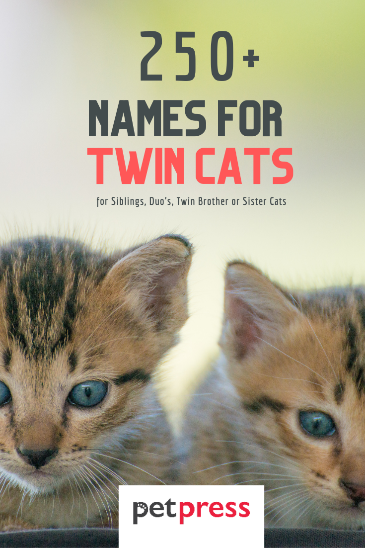 best names for twin cats