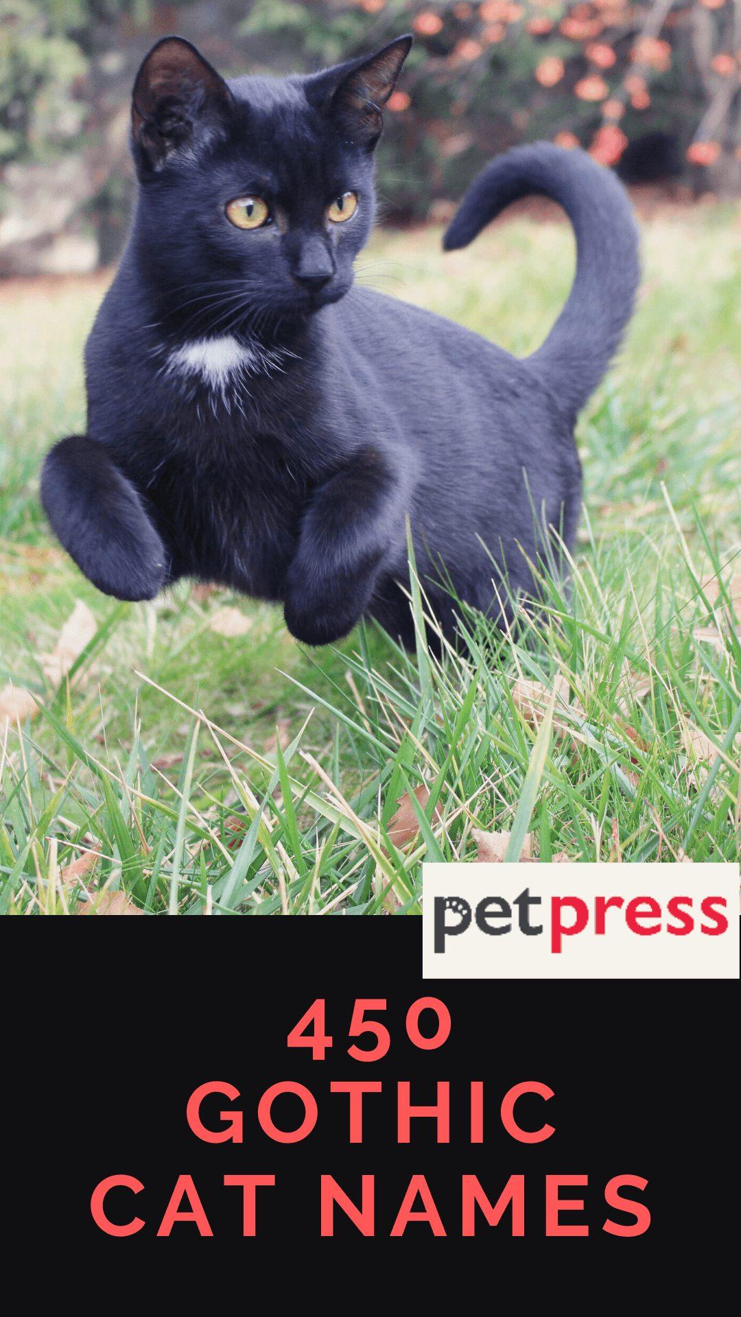 gothic-cat-names
