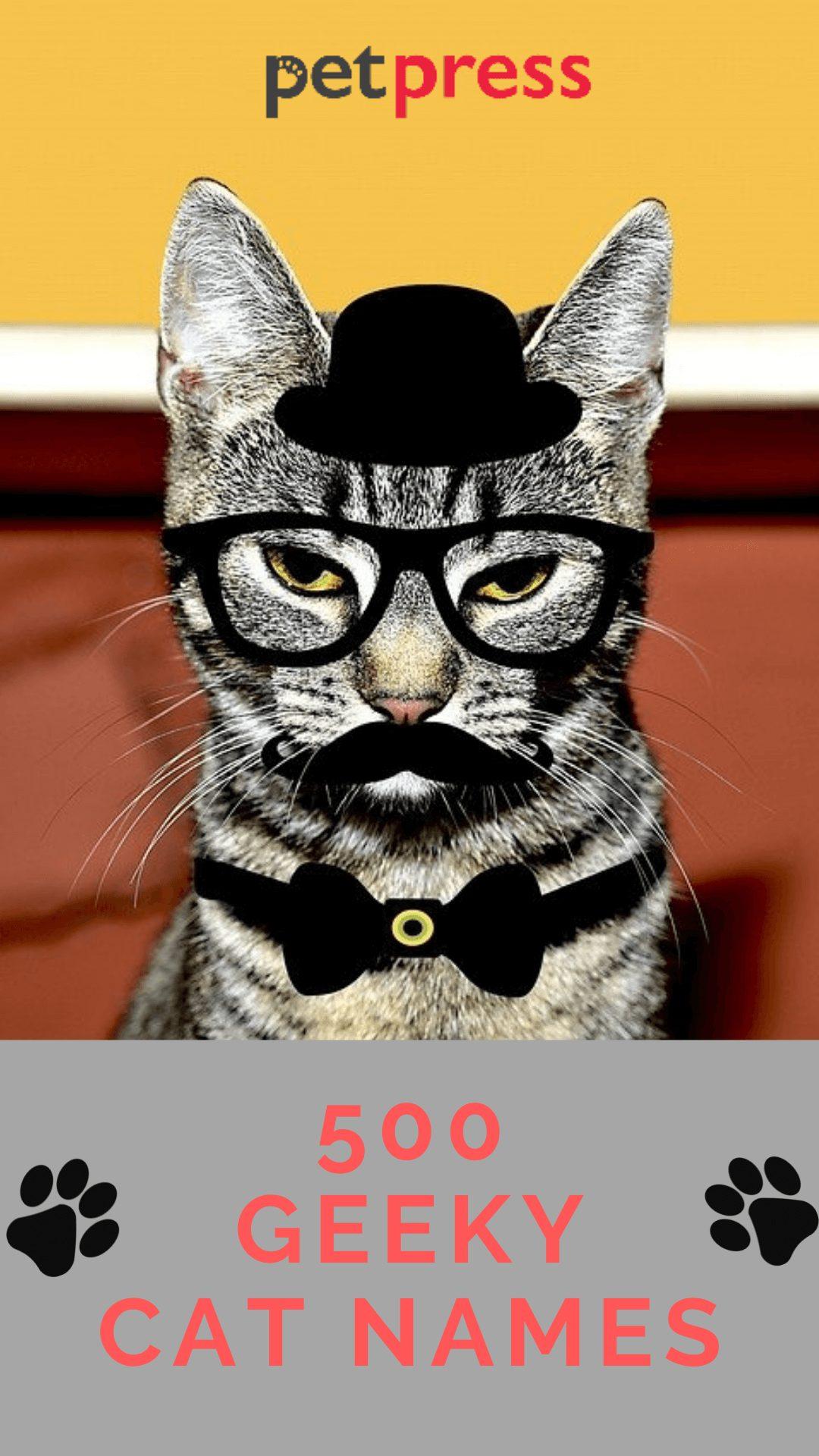geeky-cat-names