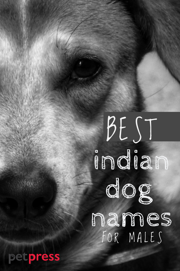 Best Male Indian Dog Names