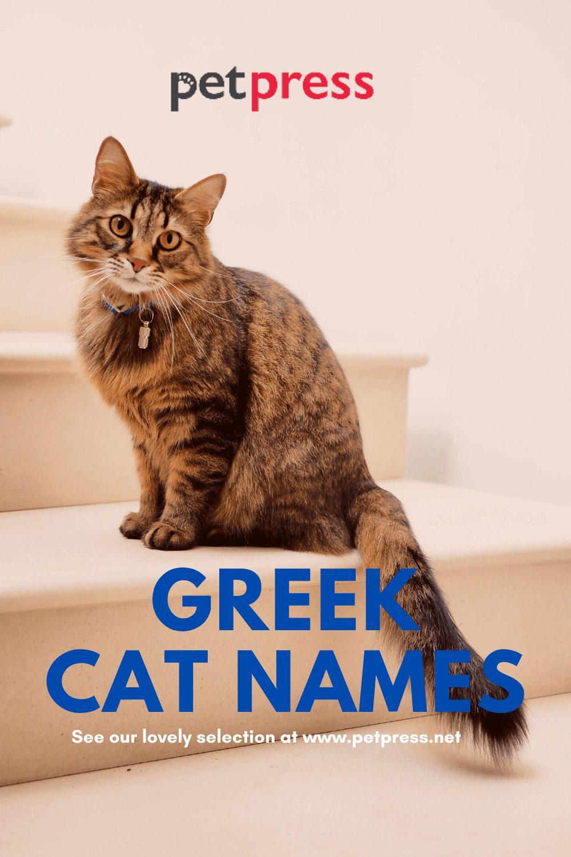 Greek Cat Names