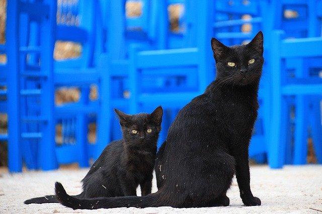 twin-sibling-cat-names