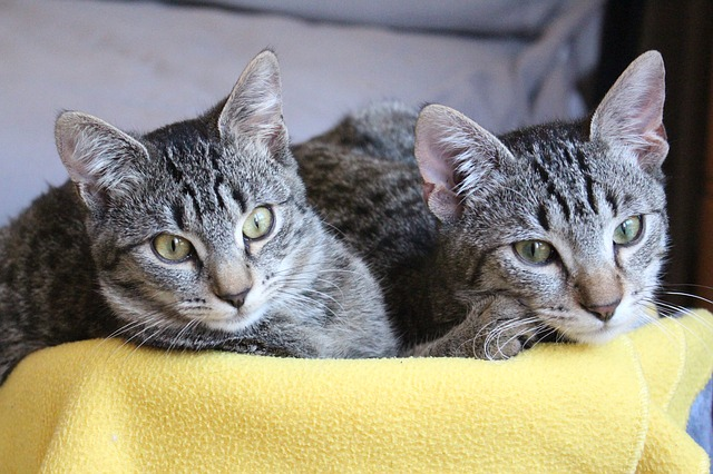 twin-cat-names-rhyme