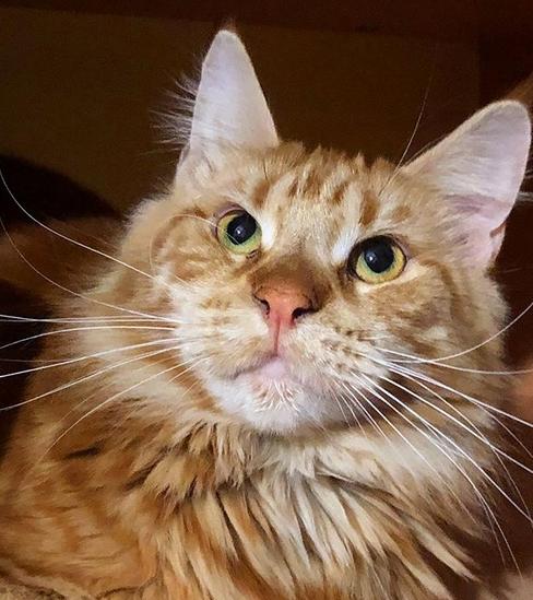 150 Perfect Orange Tabby Cat Names Petpress