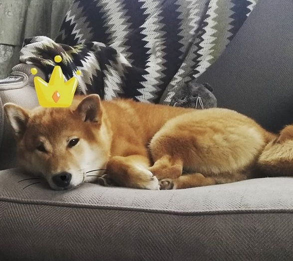 15 Reasons Why You Should Never Own Shiba Inu | Page 4 of ...