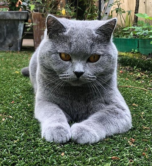 100 Awesome British Cat Names Petpress