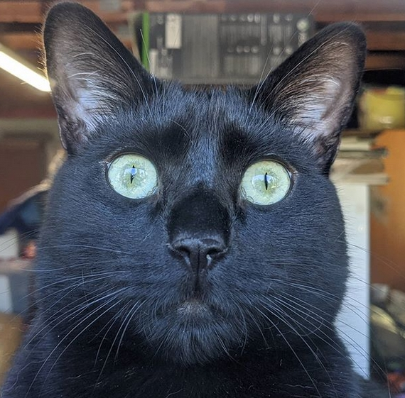 70 Funny Black Cat Names Petpress