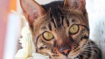 kitty pretty