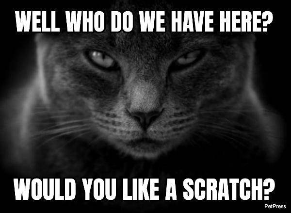 black cat meme - scratch