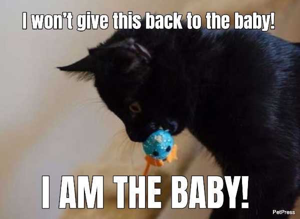 I won't give this back to the baby!  I AM THE BABY!