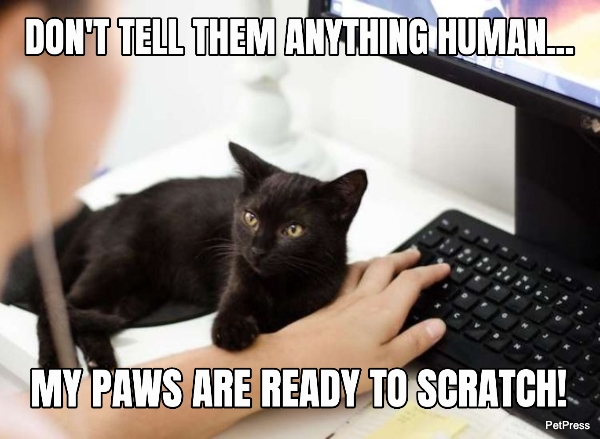 black cat meme - hostage