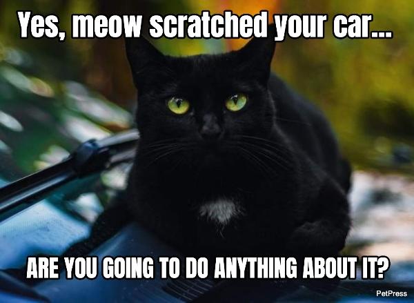 black cat meme - car scratch