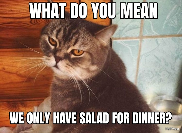fat cat meme - salad