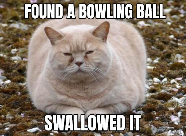 fat cat meme - bowling