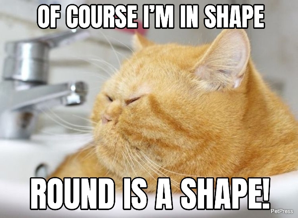 fat cat meme - round