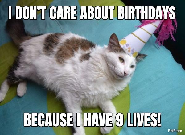cat birthday meme - birthdays