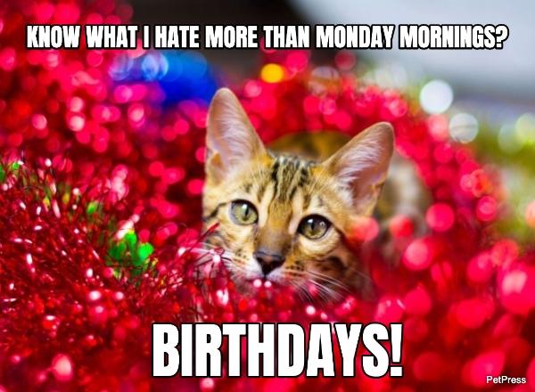 cat birthday meme - hate birthdays