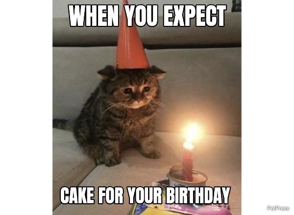 cat birthday meme - sad